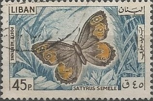 agreste (Satyrus semele)
