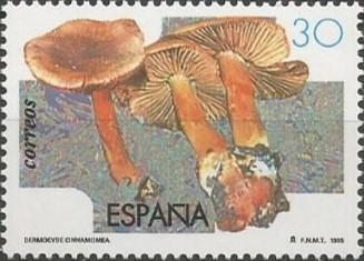 cortinario canelo (Dermocybe cinnamomea)