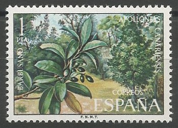botanist; species author: Apollonias canariensis (