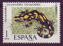 species author: Salamandra salamandra, 1758