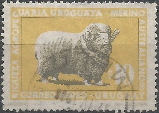 riqueza agropecuaria uruguaya: merino australiano (Ovis aries)