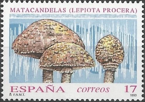 matacandelas (Lepiota procera)