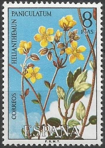 Helianthemum cinereum subsp. rotundifolium: