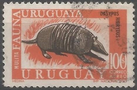 fauna uruguaya: mulita pampeana