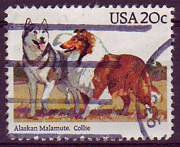 Alaskan malamute & collie