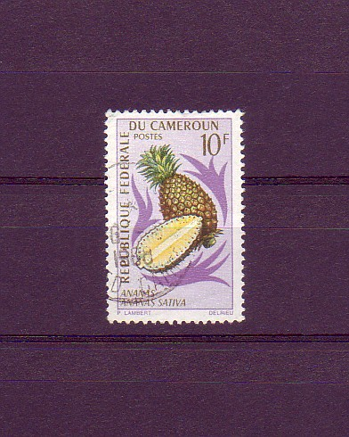 Ananas sativa