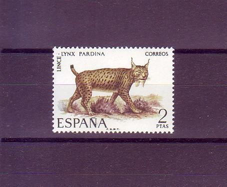 Pardelluchs (Lynx pardina)