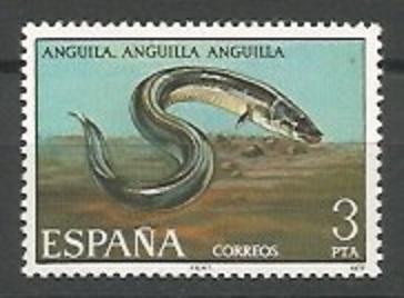 anguila europea