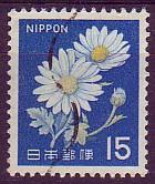 Nippon daisy